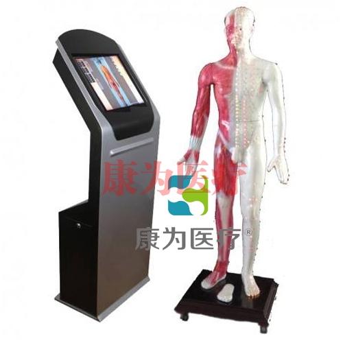 """""""康为医疗""""19寸多媒体人体针炙穴位交互数字平台"""