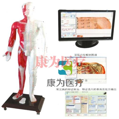 """""""康为医疗""""光电感应多媒体人体针灸穴位发光模型"""