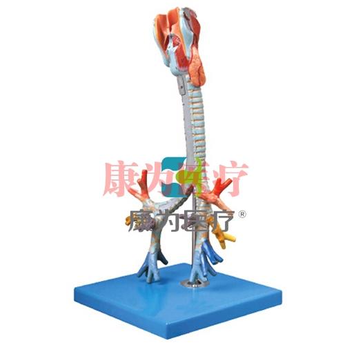 """""""康为医疗""""喉与气管、支气管树模型"""