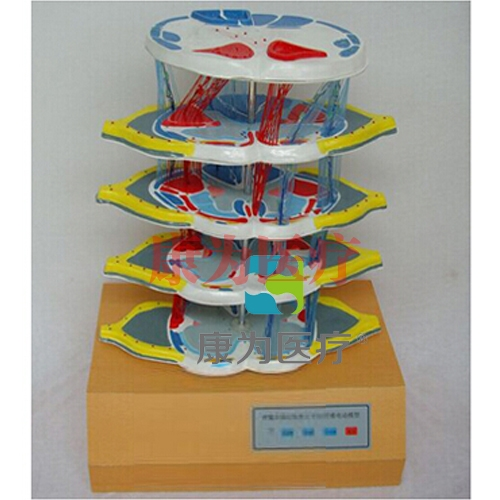 """""""威廉希尔 平台医疗""""脊髓的内部结构和上、下行纤维电动威廉希尔"""