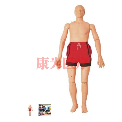 德国3B Scientific®水上救护威廉希尔,带复苏功能(成人),165 cm