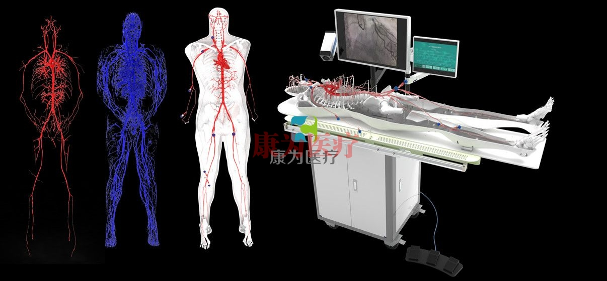 全身人体动静脉血管Manbo万博体育,动静脉血管及骨骼模拟系统