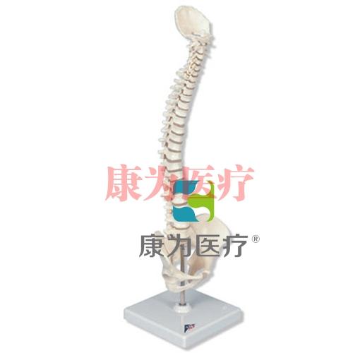 微型脊柱,活动安装