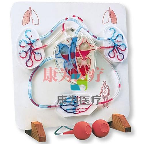 功能心脏和血液循环系统威廉希尔