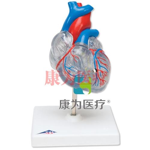经典心脏与心传导系统威廉希尔,2 部分