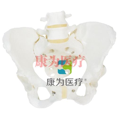 女性骨盆骨骼模型