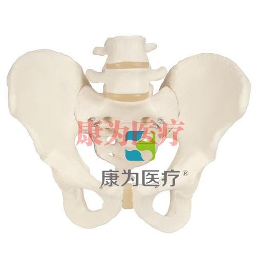 男性骨盆骨骼威廉希尔