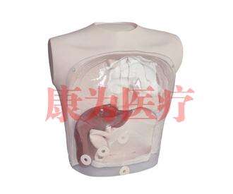 胆道镜检查模型