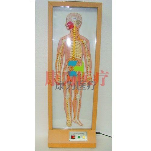 """""""康为医疗""""浮雕式全身周围神经电动模型"""