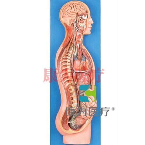 GPI神经系统硅胶威廉希尔(软硬结合)