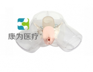 """""""康为医疗""""女性宫腔电切模型"""