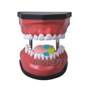 """""""康为医疗""""豪华型牙护理保健Manbo万博体育(32颗牙,可脱卸)"""