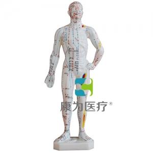 """""""康为医疗""""人体针灸模型26CM"""