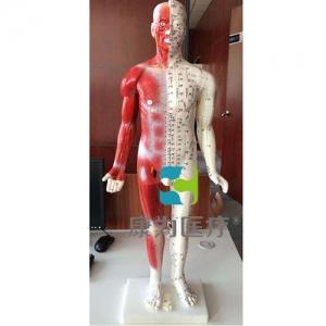 """""""康为医疗""""84CM半皮肤人体针灸模型(十四经穴模型)"""