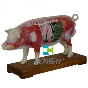 """""""康为医疗""""猪体针灸模型"""