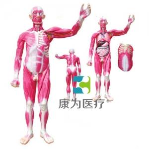 """""""康为医疗""""全身肌肉解剖附内脏器官betway必威手机版中文版"""