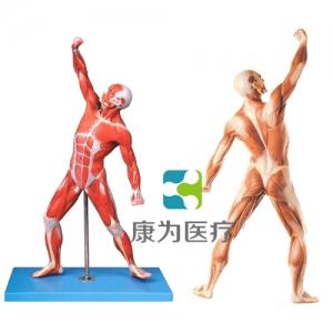 """""""康为医疗""""人体全身肌肉运动Manbo万博体育"""