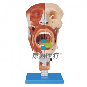"""""""康为医疗""""鼻、口、咽、喉腔Manbo万博体育"""