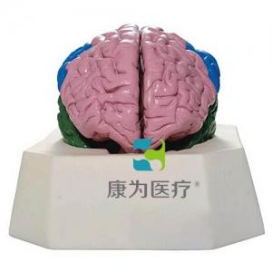 """""""康为医疗""""大脑分叶betway必威手机版中文版"""