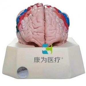 """""""康为医疗""""大脑皮质分区betway必威手机版中文版"""