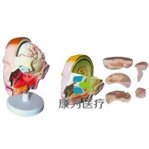 """""""康为医疗""""头解剖附脑betway必威手机版中文版(6部件)"""
