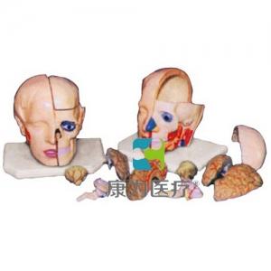 """""""康为医疗""""头解剖附脑betway必威手机版中文版(10部件)"""