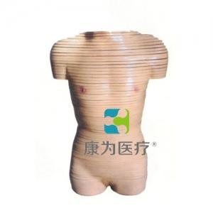 """""""康为医疗""""女性躯干横断断层解剖模型"""