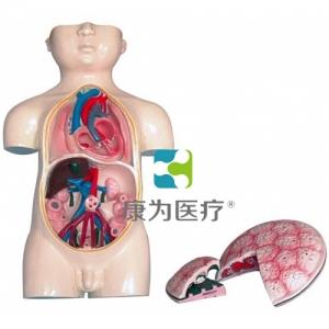 """""""康为医疗""""胎儿血液循环及胎盘模型"""