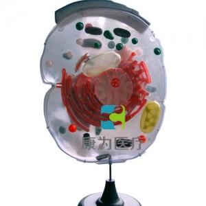 """""""康为医疗""""细胞亚显微结构模型"""