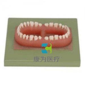 """""""康为医疗""""成人牙Manbo万博体育总汇(32颗牙)"""