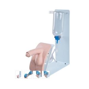 德国3B Scientific®基础版导尿训练威廉希尔,男性