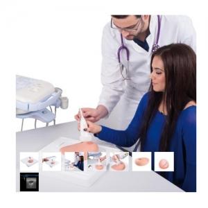 德国3B Scientific®SONOtrain™ 带囊肿的超声检查乳房威廉希尔