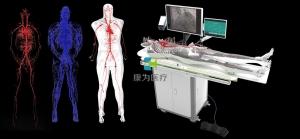 全身人体动静脉血管威廉希尔,动静脉血管及骨骼模拟系统