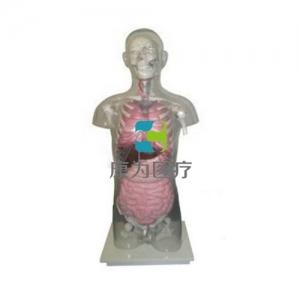 """""""康为医疗""""头颈躯干骨、骨盆与内脏关系附透明躯壳Manbo万博体育"""