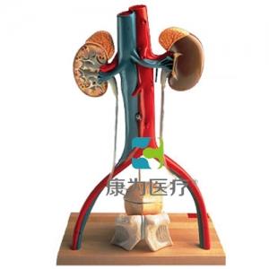 男性泌尿系统活动架威廉希尔