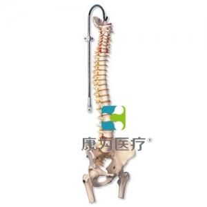 带股骨头的生命期活动脊柱威廉希尔