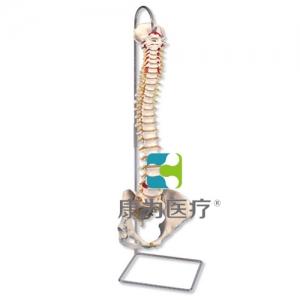 带女性骨盆的经典脊柱威廉希尔