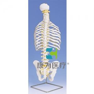 带肋骨经典活动脊柱威廉希尔