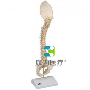 Bonelike 儿童脊柱