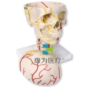 神经血管颅威廉希尔