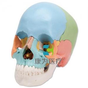 人造头颅威廉希尔,是由22块可拆卸部分组成,不同的部分使用不同颜色标记,具有很好的教学目的。