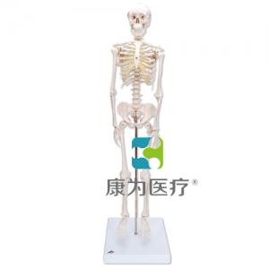 微型骨骼Shorty,带基架
