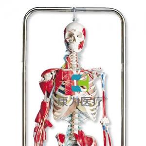 理疗骨骼威廉希尔