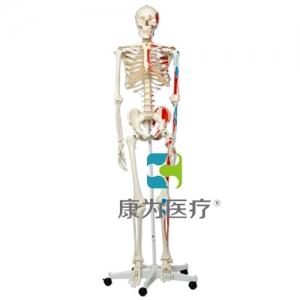 肌肉骨骼架Max, 轮式5脚支架