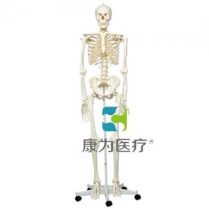 标准骨骼架Stan, 直立轮式5脚支架