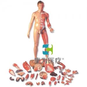 3B Scientific 真人大小两性欧洲人体肌肉臂威廉希尔,39部分