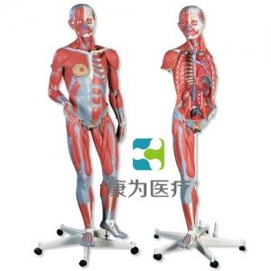 豪华型两性人体肌肉臂威廉希尔,45部分