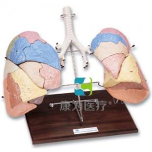 肺分区复制威廉希尔