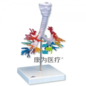 CT支气管带咽喉