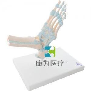 配置韧带的足部骨骼威廉希尔